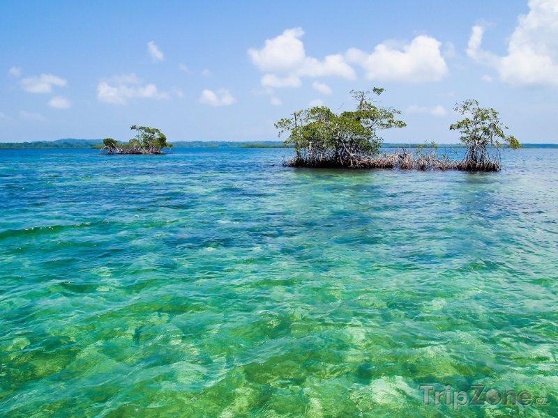 Fotka, Foto Mangrovy u Bocas del Toro (Panama)