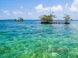 Mangrovy u Bocas del Toro