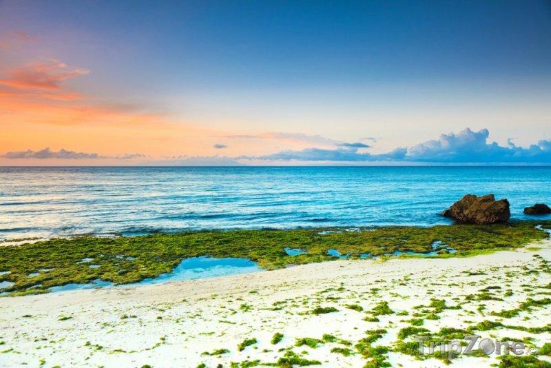 Fotka, Foto Mořské řasy u pláže (Filipíny)