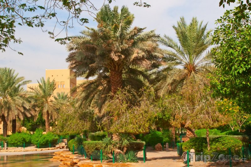 Fotka, Foto Palmová zahrada v Rijádu (Saúdská Arábie)