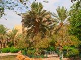 Palmová zahrada v Rijádu
