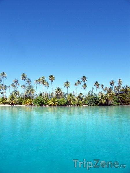 Fotka, Foto Palmy na břehu ostrova Raiatea (Francouzská Polynésie)