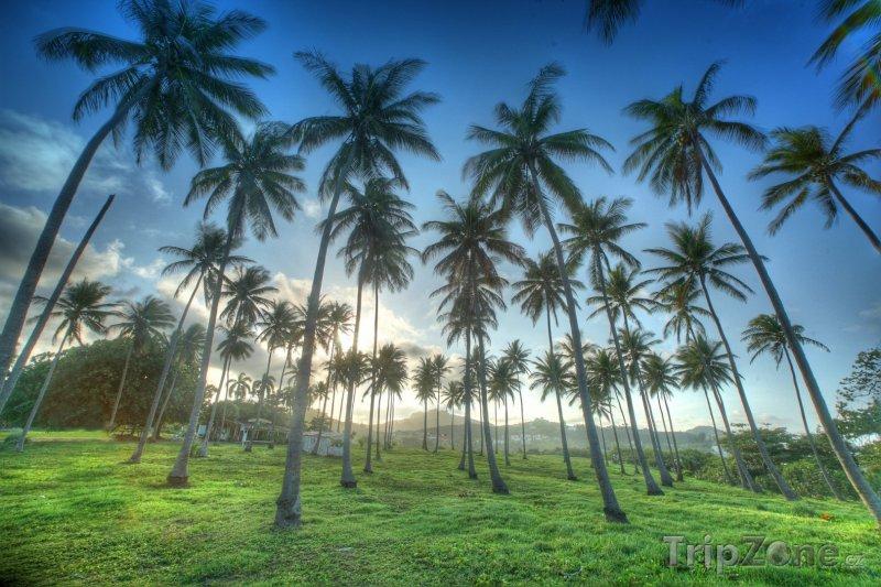 Fotka, Foto Palmy na ostrově Luzon (Filipíny)