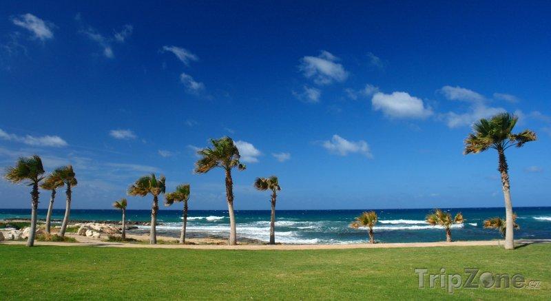 Fotka, Foto Palmy na pláži (Pafos, Kypr)