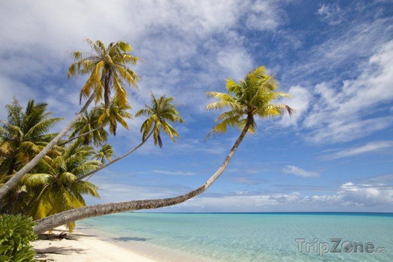 Fotka, Foto Palmy na pláži (Martinik)