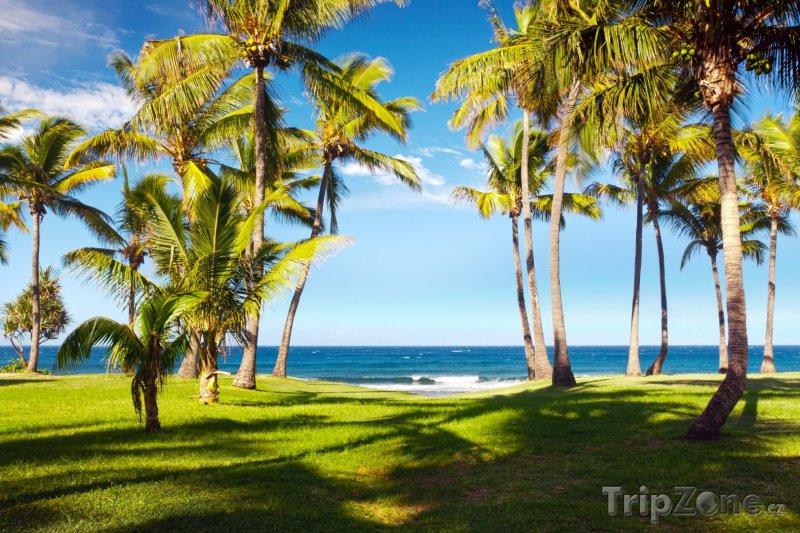 Fotka, Foto Palmy u pláže (Réunion)
