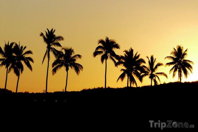 Fotka, Foto Palmy v západu slunce (Réunion)