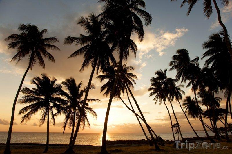 Fotka, Foto Palmy v západu slunce (Dominikánská republika)