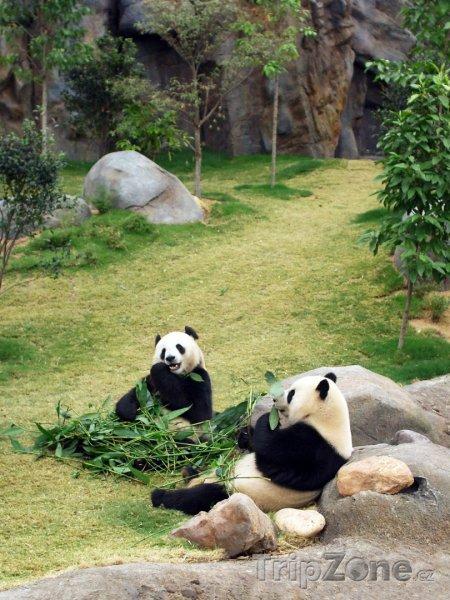 Fotka, Foto Pandy v zoologické zahradě (Hongkong)