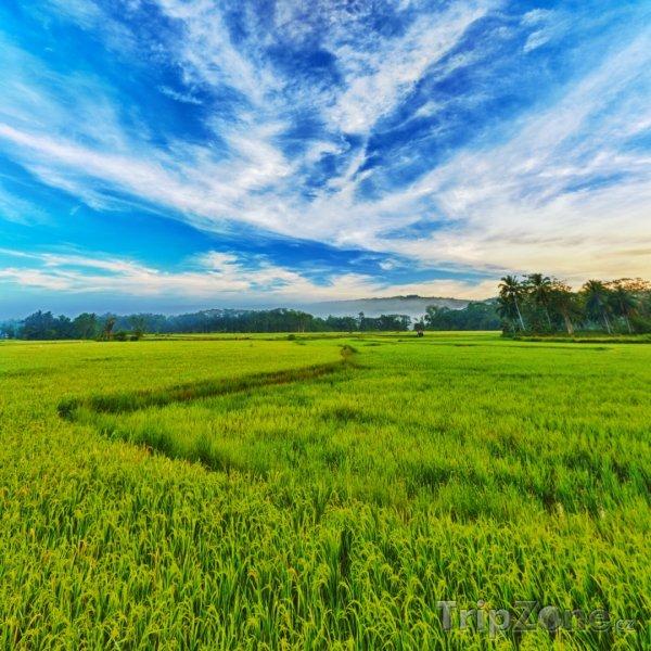 Fotka, Foto Panoráma rýžového pole (Filipíny)