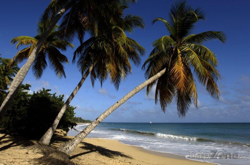 Fotka, Foto Pláž Le Saline v obci Sainte-Anne (Martinik)
