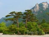 Pohled do parku Seoraksan