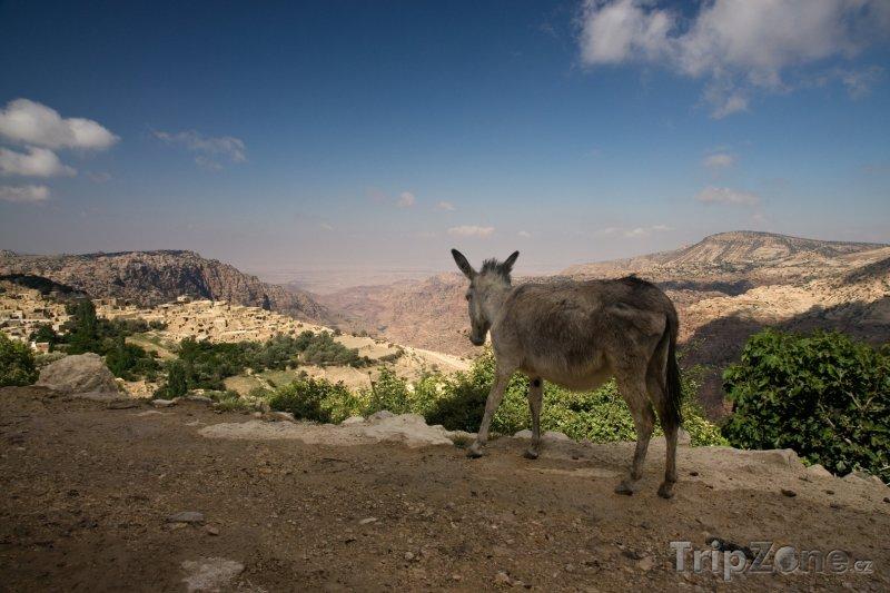 Fotka, Foto Pohled na vesničku Wadi Dana (Jordánsko)