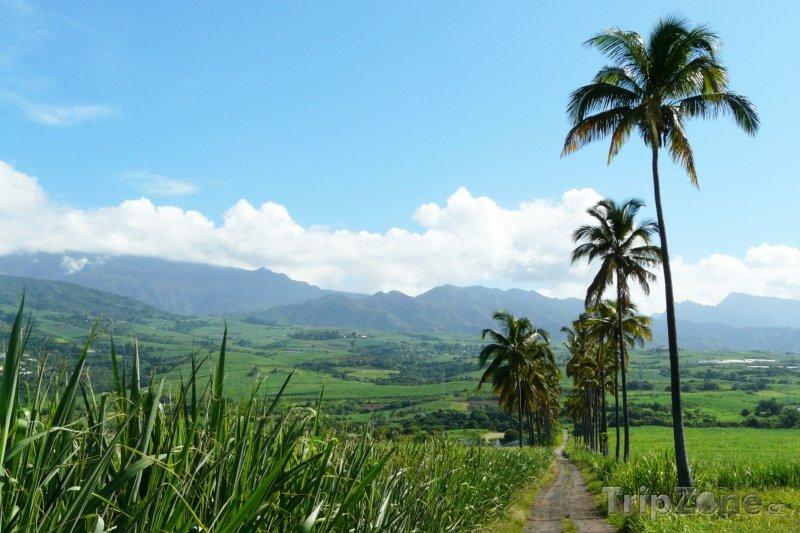 Fotka, Foto Pole cukrové třtiny (Réunion)