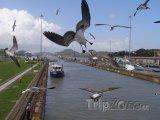 Rackové nad Panamským průplavem
