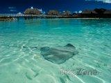 Rejnok u pláže na Bora Bora