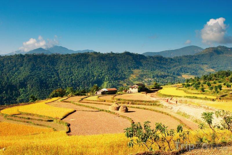 Fotka, Foto Rýžové pole (Nepál)
