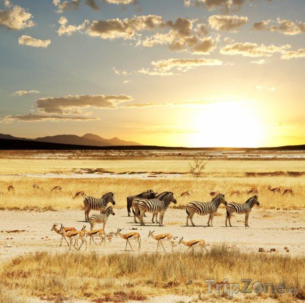 Fotka, Foto Safari (Namibie)