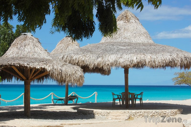 Fotka, Foto Slunečníky z rákosí (Martinik)
