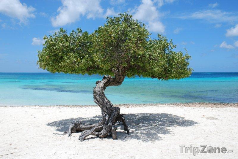 Fotka, Foto Strom na pláži (Aruba)