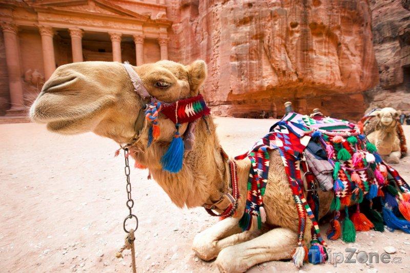 Fotka, Foto Velbloud ve skalním městě Petra (Jordánsko)
