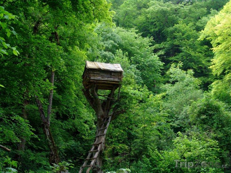 Fotka, Foto Chaloupka na stromu (Arménie)