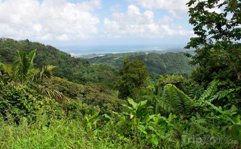 Fotka, Foto Deštný prales El Yunque (Portoriko)