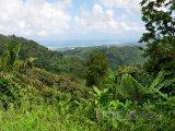 Deštný prales El Yunque