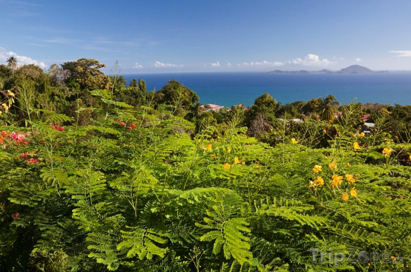 Fotka, Foto Flóra na Guadeloupe (Guadeloupe)