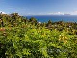 Flóra na Guadeloupe