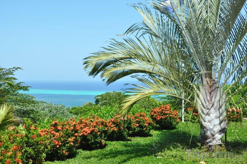 Fotka, Foto Flora ostrova Roatán (Honduras)