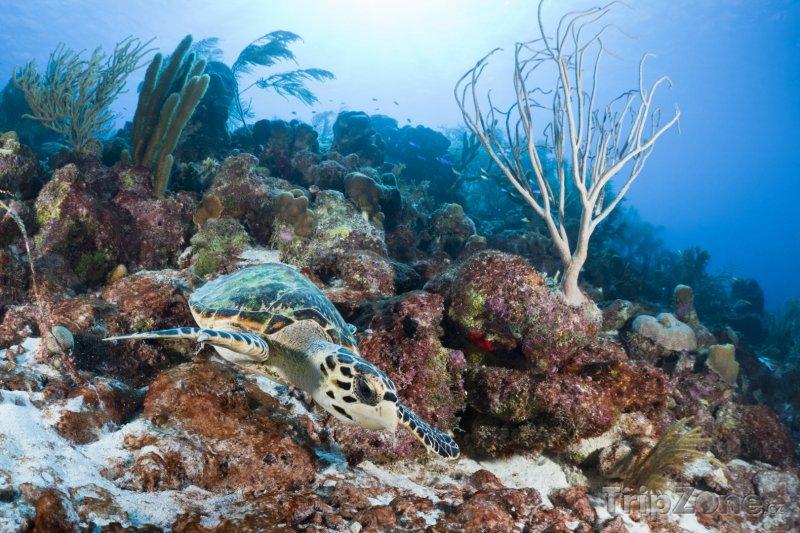 Fotka, Foto Kareta pravá (Bonaire)