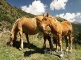Koně v horách