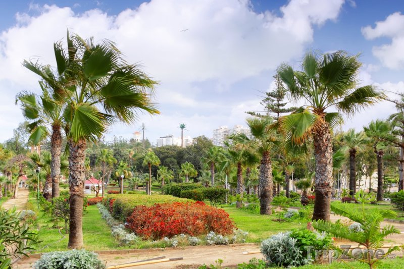 Fotka, Foto Královský park (Alexandrie, Egypt)
