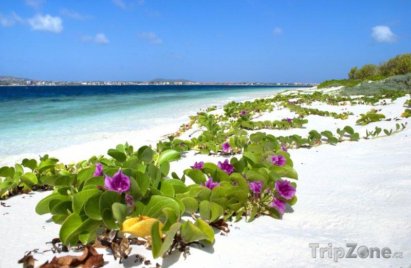 Fotka, Foto Květiny na pláži (Bonaire)