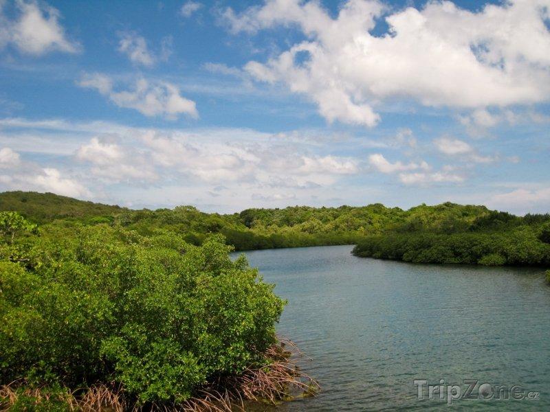 Fotka, Foto Mangovy na ostrově Roatán (Honduras)
