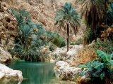 Oáza v údolí Wadi Shab