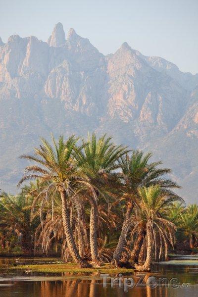 Fotka, Foto Palmy a jezero na ostrově Socotra (Jemen)