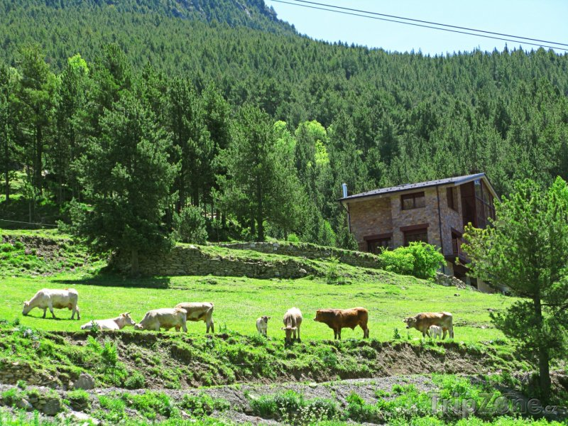 Fotka, Foto Pasoucí se dobytek v horách (Andorra)