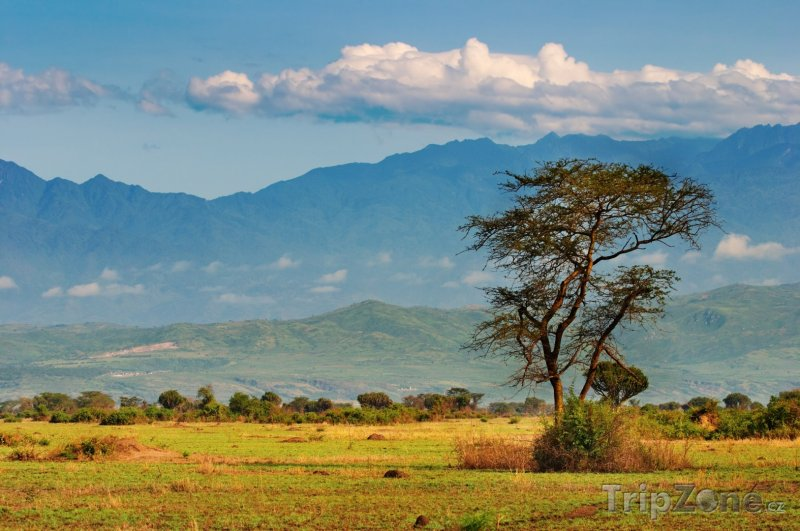 Fotka, Foto Pohoří Ruwenzori (Uganda)