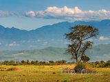 Pohoří Ruwenzori