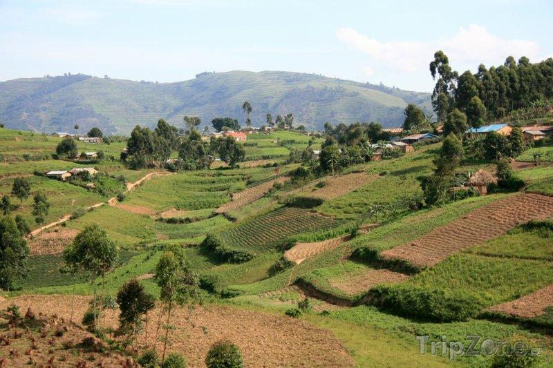 Fotka, Foto Rýžová pole v oblasti Kisoro (Uganda)