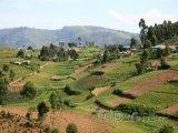 Rýžová pole v oblasti Kisoro