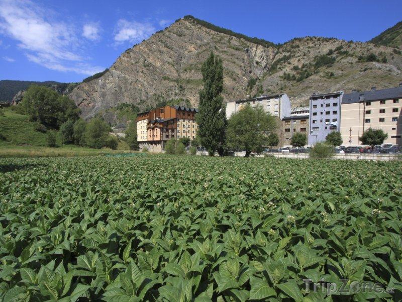 Fotka, Foto Tabáková plantáž ve městě Canillo (Andorra)