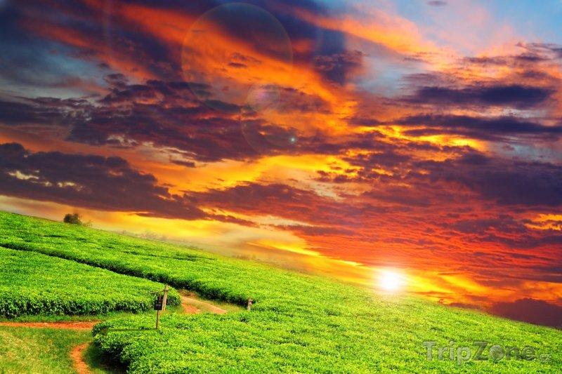 Fotka, Foto Západ slunce nad čajovou plantáží (Uganda)