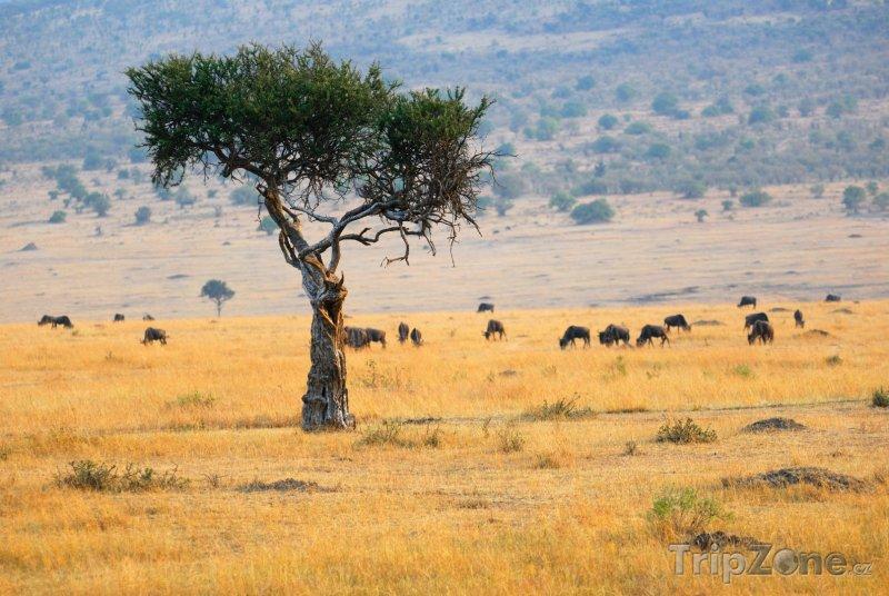 Fotka, Foto Antilopy v parku Masai Mara (Keňa)