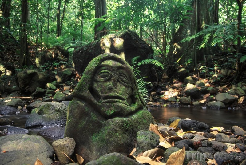 Fotka, Foto Deštný prales na ostrově Moorea (Francouzská Polynésie)