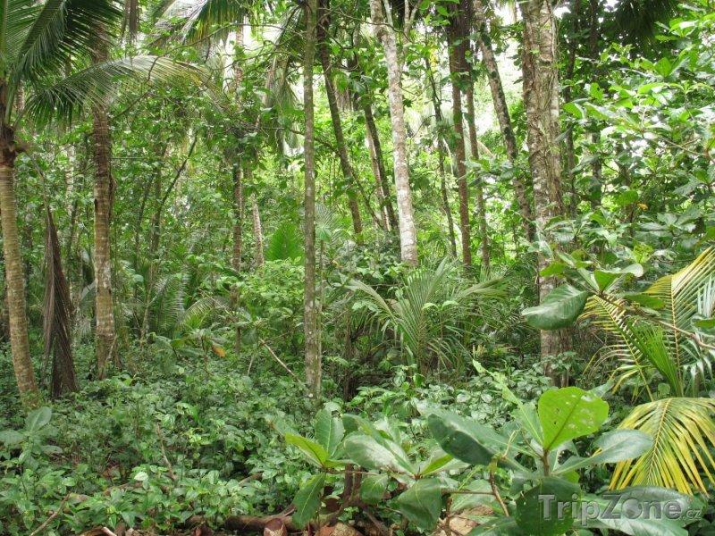 Fotka, Foto Deštný prales (Kostarika)