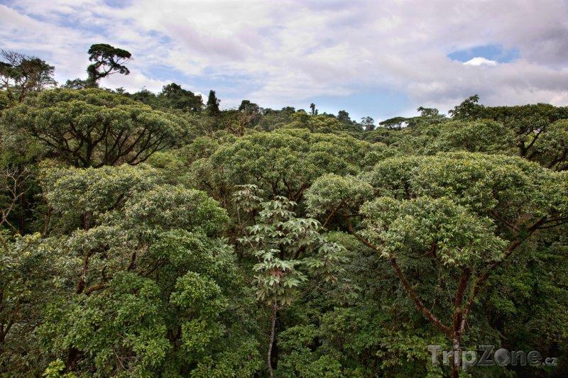 Fotka, Foto Džungle (Kostarika)