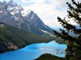 Jezero Peyto v národním parku Banff